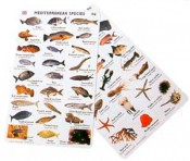 Lagresa Fishcards Canary Islands